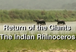 Wildlife - Return of the Giants - The Indian Rhinocero