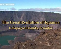 Great Nature - The Great Evolution of Iguanas
